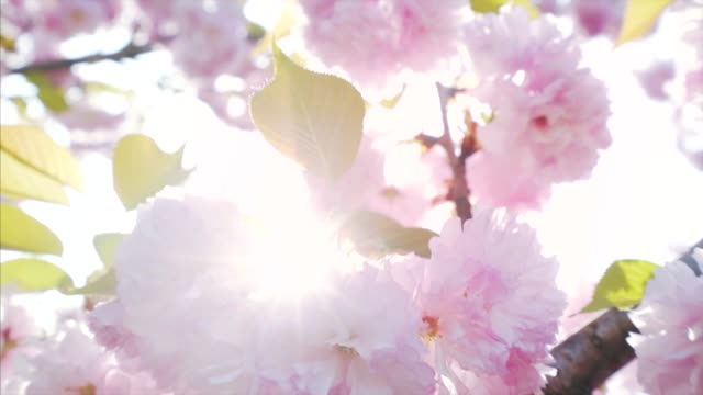 springtime season. - beauty in nature stock videos & royalty-free footage