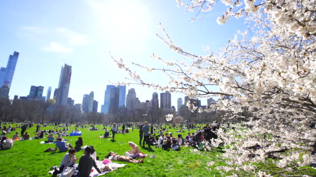 springtime sunlight illuminates cherry blossoms, and people on the sheep meadow in central park new york. manhattan skyscrapers can be seen behind. - マンハッタン セントラルパーク点の映像素材/bロール