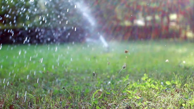 sprinkler on sunset - sprinkler system stock videos & royalty-free footage