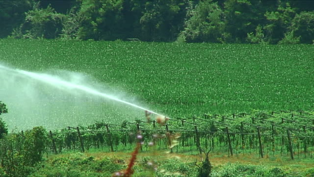 WS Sprinkler spraying crop in vineyard / Tuscany, Italy