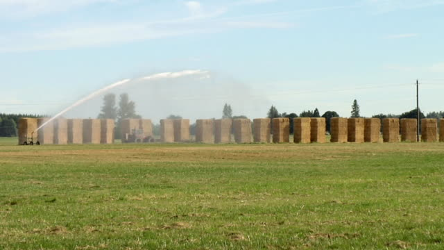 ws, sprinkler spraying on field with hay bales in background, eugene, oregon, usa - stationary process plate stock videos & royalty-free footage