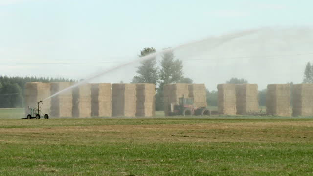 ws, sprinkler spraying on field with hay bales in background, eugene, oregon, usa - eugene oregon stock videos & royalty-free footage