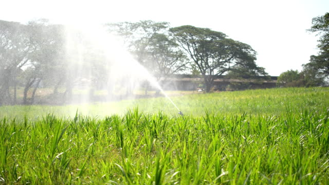 sprinkler system on agricultural land - sprinkler system stock videos & royalty-free footage