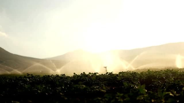 sprinkler system - beet stock videos & royalty-free footage