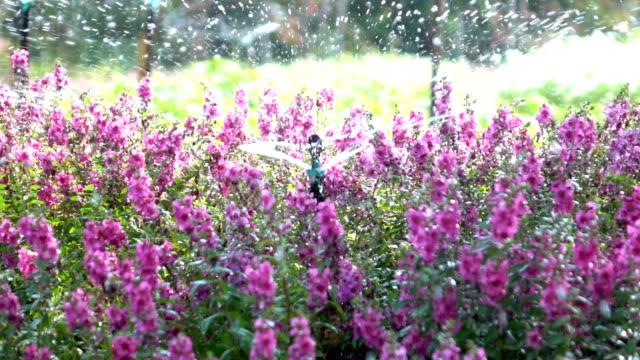 Sprinkler water in bloemen tuin, slow-motion shot