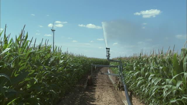 ms sprinkler watering corn field, perwez, namur, belgium - weg stock-videos und b-roll-filmmaterial