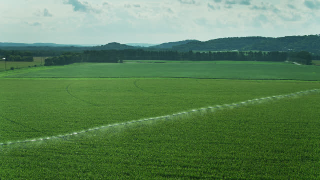 sprinkler watering vast cornfield in wisconsin - drone shot - sprinkler system stock videos & royalty-free footage