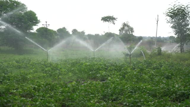 sprinklers, automatic sprinkler irrigation system watering in the farm, maharashtra, india. - recreational pursuit stock videos & royalty-free footage