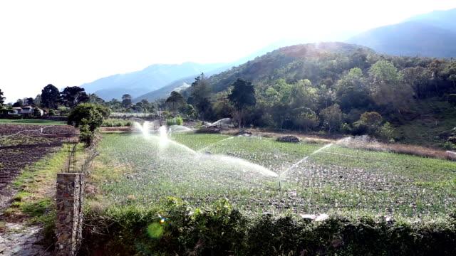 Sprinklers on in the Morning