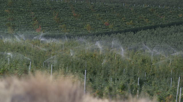 sprinklers running on apple farm closer - orchard stock videos & royalty-free footage