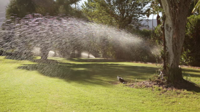 MS Sprinklers watering lawns in early morning / Los Angeles, California, United States