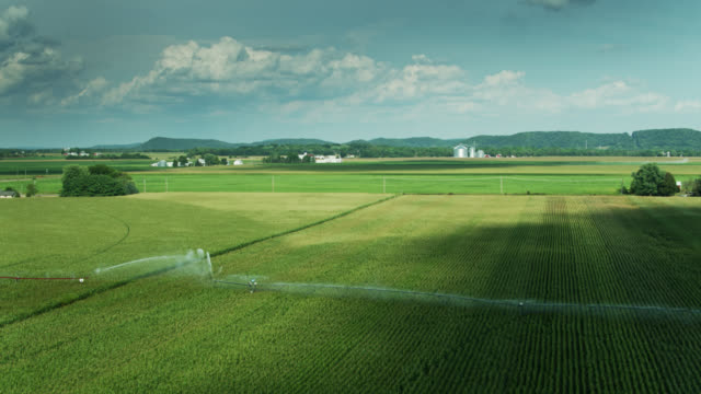 sprinklers watering vast field of wheat in wisconsin - drone shot - sprinkler system stock videos & royalty-free footage