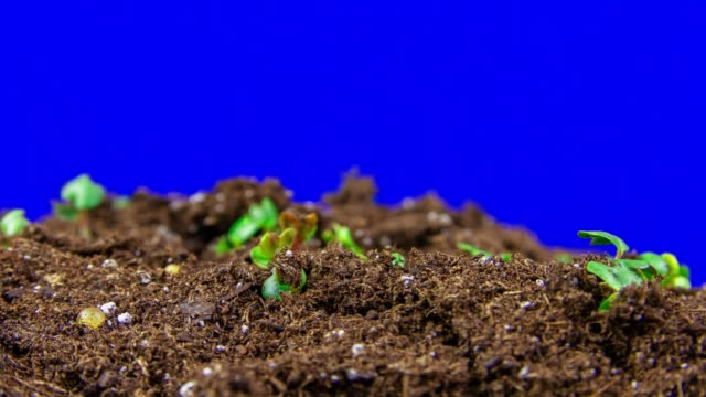 sprouts growing in fertile soil - environmental conservation stock videos & royalty-free footage