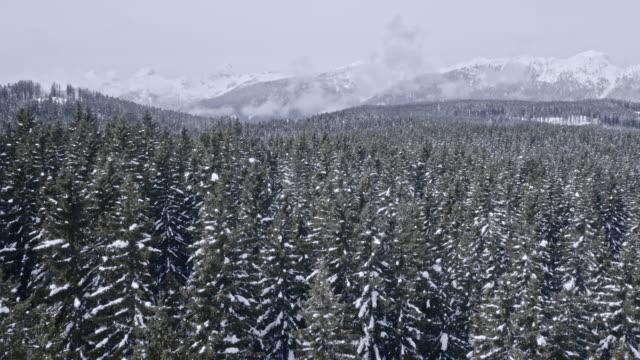 Luchtfoto vuren bos in de winter