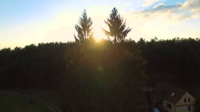 aerial spruce tree at sunset - spruce stock videos & royalty-free footage