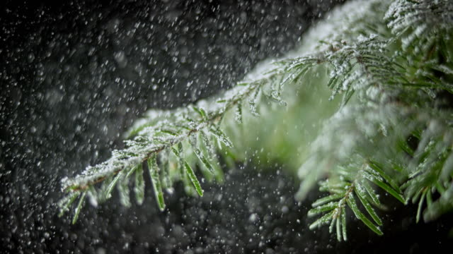 slo mo ld spruce twig in snowfall against black background - spruce stock videos & royalty-free footage