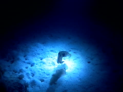 squid attracted to divers lights at night - 水中カメラ点の映像素材/bロール