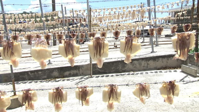 squids being dried in sun, okinawa, japan - 水産業点の映像素材/bロール