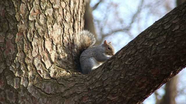 squirrel eating nuts - squirrel stock videos and b-roll footage