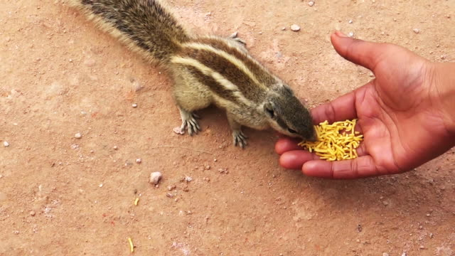 Squirrel eats out of human hand