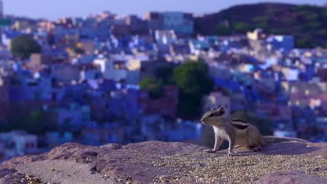 a squirrel in jodhpur, rajasthan, india - old town点の映像素材/bロール