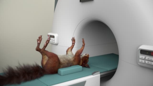 squirrel mri - squirrel stock videos and b-roll footage