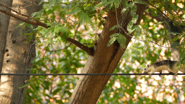 squirrel on power cable. - wire stock videos & royalty-free footage