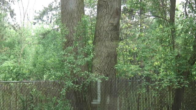 リスのツリー 2 -hd 1080 /60 i - 潅木点の映像素材/bロール