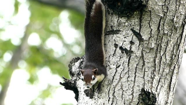squirrel on the tree - foraggiamento video stock e b–roll