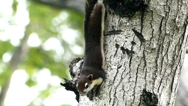 squirrel on the tree - roditore video stock e b–roll