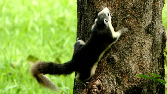 vídeos de stock e filmes b-roll de squirrel on the tree - árvore tropical