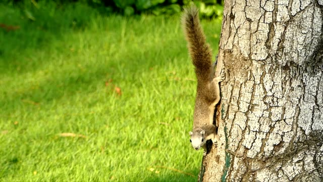 squirrel on the tree - squirrel stock videos and b-roll footage