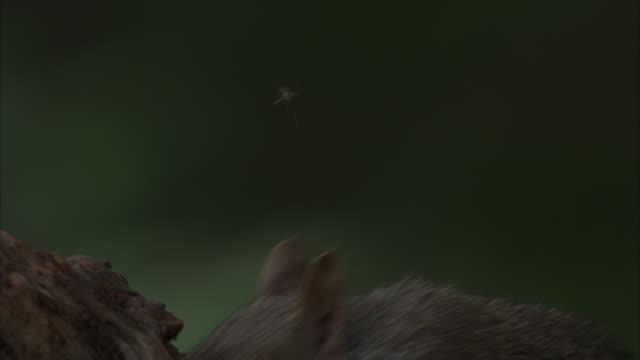 a squirrel perches on a stump and nibbles food. - paletto da cricket video stock e b–roll