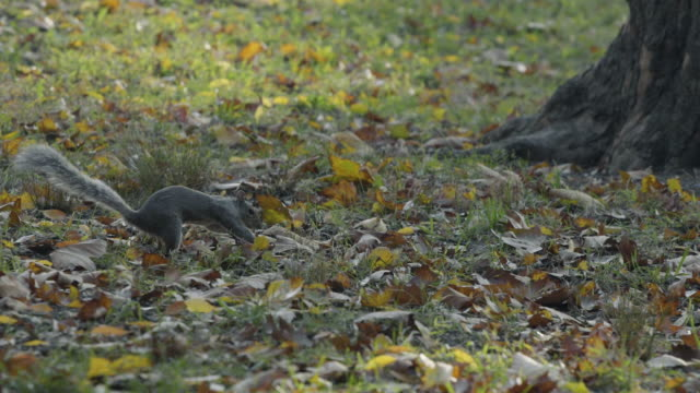 squirrel season - streifenhörnchen stock-videos und b-roll-filmmaterial