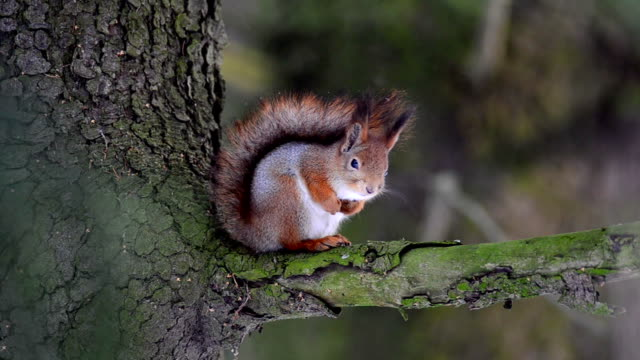 squirrel thinking - squirrel stock videos and b-roll footage