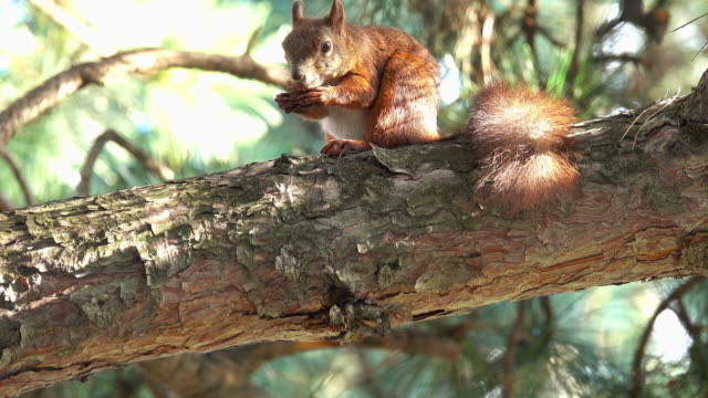 squirrel - squirrel stock videos and b-roll footage