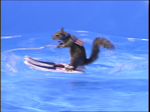 a squirrel water skis while another squirrel drives a speedboat. - schnellboot stock-videos und b-roll-filmmaterial