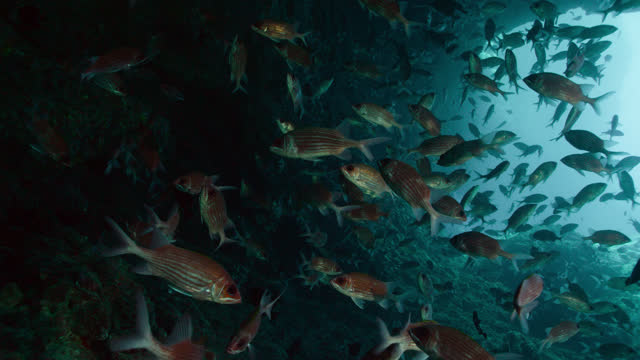 squirrelfish in cave, ascension island. - squirrelfish stock videos & royalty-free footage