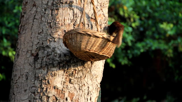 squirrels 食事のフルーツのバスケットです。 - よじ登る点の映像素材/bロール