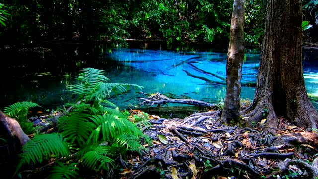 sra morakot blue pool at krabi province, thailand. clear emerald pond in tropical forest. the roots of trees with a beautiful lagoon in rain forest. - standing water stock videos & royalty-free footage