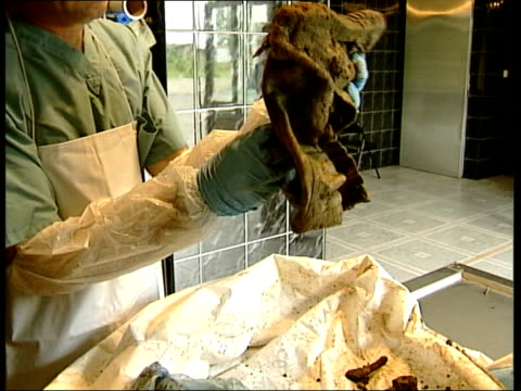 srebrenica 10th anniversary int forensic worker shakes boot covered with dirt exhumed from mass grave as human bones fall out onto table forensic... - mass grave stock videos and b-roll footage