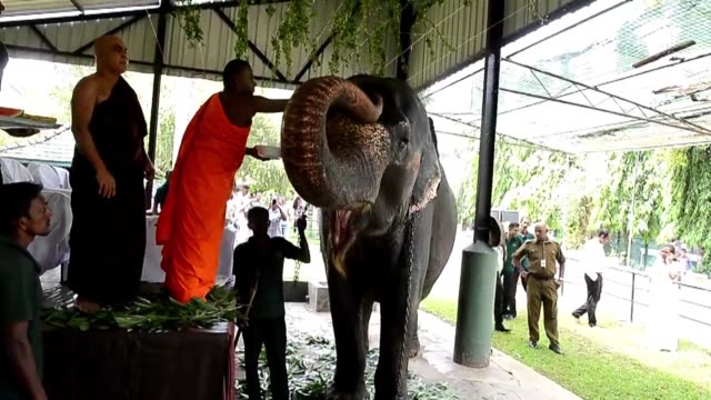sri lanka celebrates its sinhala new year with buddhist monk anointting elephants and other festivities - monk stock videos and b-roll footage