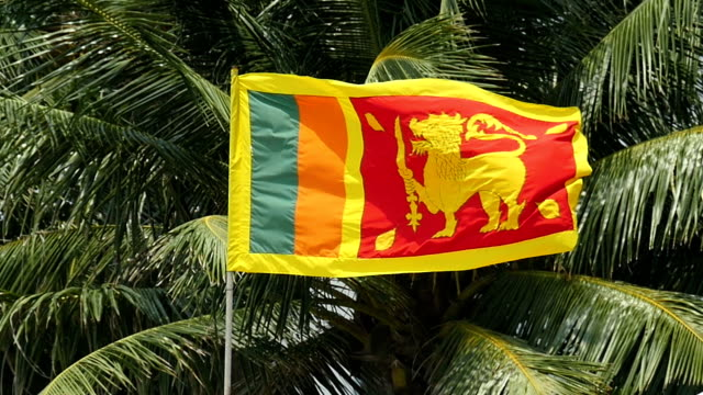 sri lankan flag slow motion against coconut tree - sri lankan culture stock videos & royalty-free footage