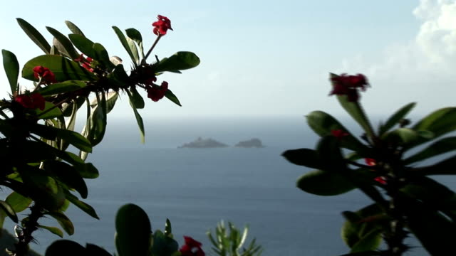 st barth view of the ocean between tropical flower trees - st lucia stock videos & royalty-free footage