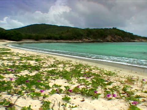 st. john: morning glories on the sand at lameshur bay beach - artbeats stock videos & royalty-free footage