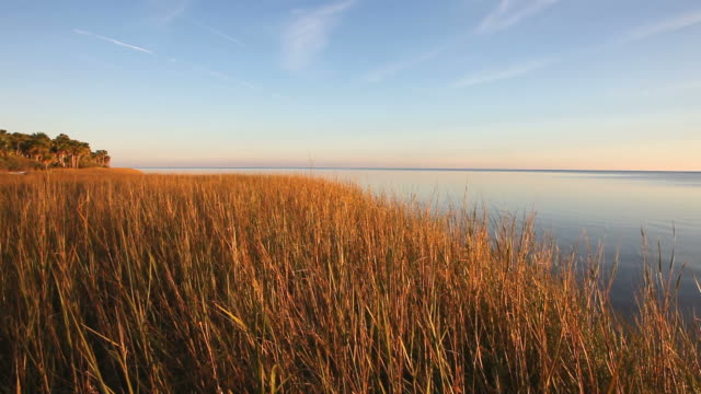 st. marks national wildlife refuge - marsh stock videos & royalty-free footage
