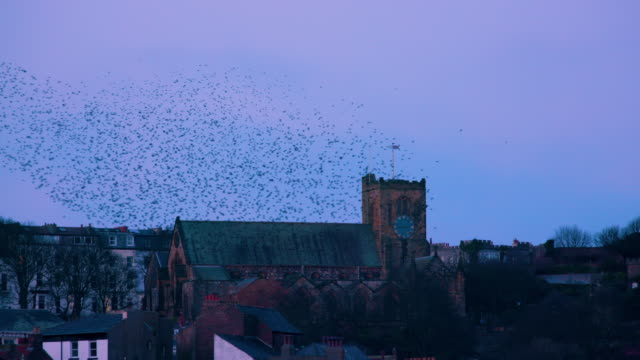 vídeos de stock e filmes b-roll de st mary's church & starlings murmuration, murmuration scarborough, north yorkshire, england - scarborough reino unido