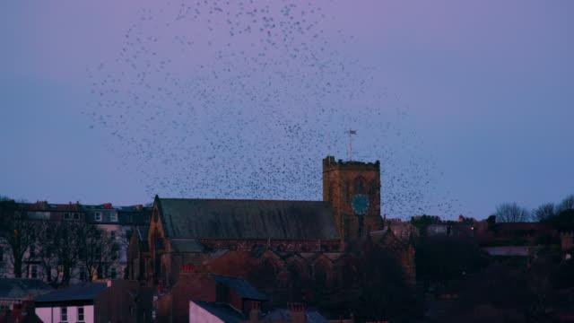 vidéos et rushes de st mary's church & starlings murmuration, murmuration scarborough, north yorkshire, england - etourneaux