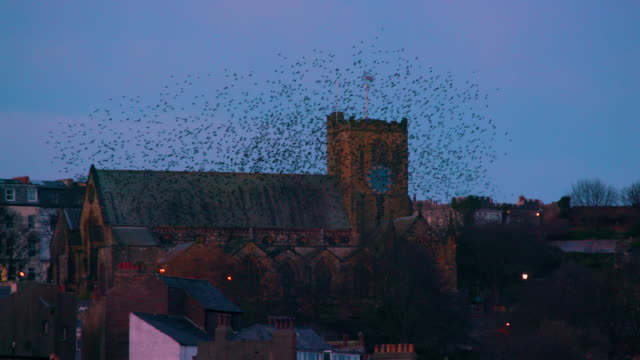 St Mary's Church & Starlings Murmuration, Murmuration Scarborough, North Yorkshire, England