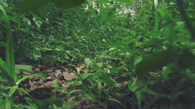 vídeos y material grabado en eventos de stock de tiro estabilizado de bosques tropicales - mancha solar